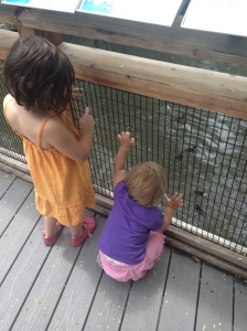 Peanut and Twig loving the ducks at the Tracy Aviary.